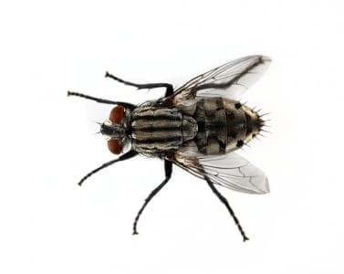 D-Tec Pest Solutions - General Pest Control