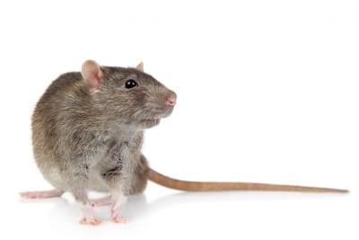 D-Tec Pest Solutions - Rodents