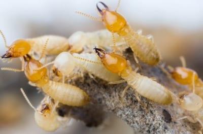 D-Tec Pest Solutions - Termite Treatment Cost