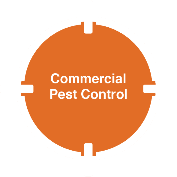 D-Tec Pest Solutions - Home