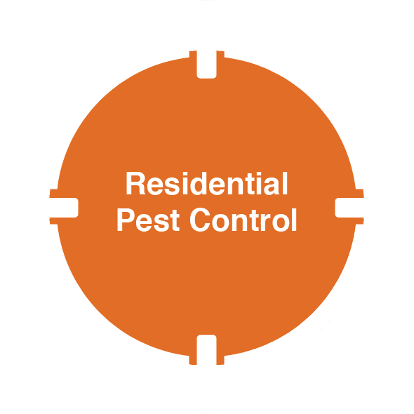 D-Tec Pest Solutions - Home
