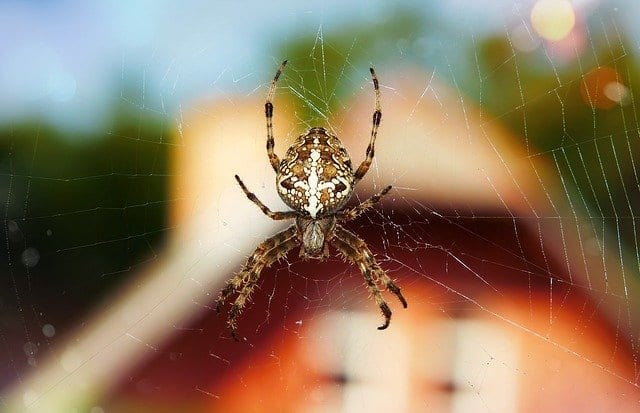 D-Tec Pest Solutions - Spiders