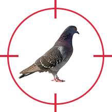 D-Tec Pest Solutions - Contract Shooting Pest Control