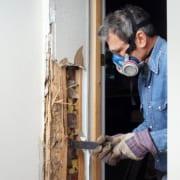 termite treatment brisbane