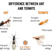 Termite vs Ants